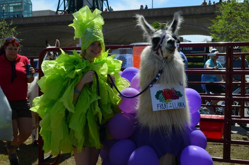 Jenna Dirksen (11) and Pie the llama sport their punny costumes around World's Fair Park
