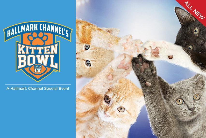 2017 Kitten Bowl