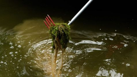 War in the Water: Man vs. Plant