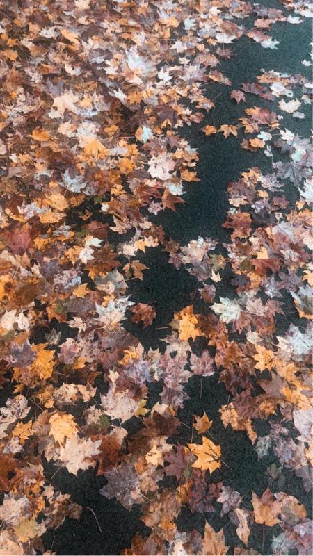 Its Fall Yall!